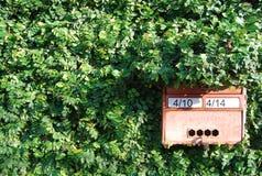 Een brievenbus op de groene muur van ficuspumila Stock Afbeeldingen