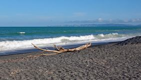 Een brok van drijfhout op een verlaten strand in Nieuw Zeeland stock afbeelding