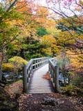 Een brug en het kleurenbos in de vroege herfst Stock Foto