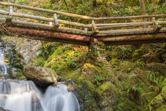 Een brug in het hout Royalty-vrije Stock Foto