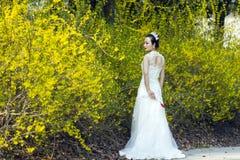 Een bruid met de witte tribune van de huwelijkskleding door Gouden jasmijn bloeit Royalty-vrije Stock Afbeelding