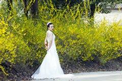 Een bruid met de witte tribune van de huwelijkskleding door Gouden jasmijn bloeit Stock Fotografie