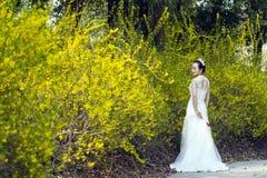 Een bruid met de witte tribune van de huwelijkskleding door Gouden jasmijn bloeit Stock Foto's
