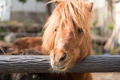 Een bruin paard Stock Foto