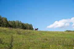 Een bruin paard bevindt zich op een groene heuvel, naast een bos, tegen een blauwe hemel Stock Fotografie
