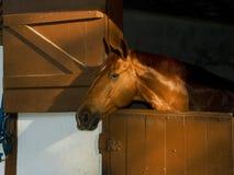 Een bruin paard bij stal Royalty-vrije Stock Foto's
