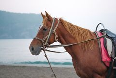 Een bruin paard die zich op een beachside bevinden stock foto's