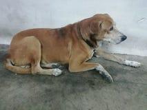 Een bruine hondslaap stil op de vloer royalty-vrije stock afbeeldingen