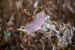 Een bruine schaduw van het blad ligt op het gras, gevallen van de boom in de herfst peppered het seizoen en een weinig met vorst Stock Foto