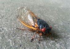 Een bug Stock Fotografie