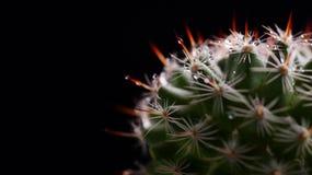 Een cactus Royalty-vrije Stock Fotografie