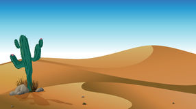 Een cactus in de woestijn vector illustratie