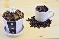 Een cactus en Koffiebonen Royalty-vrije Stock Foto