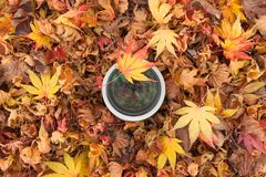 Een cameralens over een gekleurde bladerenachtergrond in de herfst Stock Afbeelding