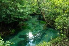 Een charmante transparante rivier in het mangrovebos stock fotografie