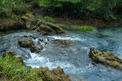 Een charmante transparante rivier in het mangrovebos royalty-vrije stock afbeeldingen