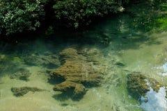 Een charmante transparante rivier in het mangrovebos stock afbeeldingen