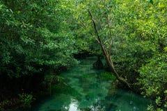 Een charmante transparante rivier in het mangrovebos stock foto's