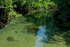 Een charmante transparante rivier in het mangrovebos stock afbeelding