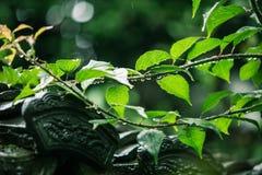 Een Chinees dak na de regen, met groen naast Royalty-vrije Stock Afbeeldingen
