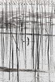 Een Chinese visser die intertidal streek vist Stock Foto's
