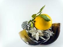 Een citroen en hoornen Royalty-vrije Stock Fotografie