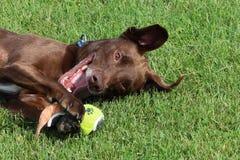 Een Close-up van een Favoriet Hondstuk speelgoed stock afbeelding