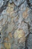 Een close-up van een vreemd houten patroon Royalty-vrije Stock Afbeelding