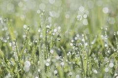 Een close-up van vers groen die gras met dauwdruppeltjes wordt behandeld Stock Fotografie