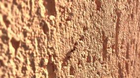 Een close-upmacro van een mier wordt geschoten die langs een heldere kleurenmuur die kruipt stock video