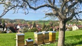 Een cluster van bijenkorven zit onder bomen stock videobeelden