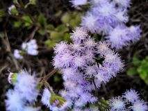 Een cluster van bloemen stock foto's