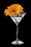 Een cocktail van het gerberamadeliefje Royalty-vrije Stock Afbeeldingen