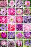Een collage van roze en purpere kleuren, verticaal, A3 Stock Afbeelding