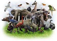 De Collage van dieren stock afbeeldingen