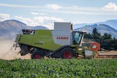 Een Combine maaidorser werkt aan een landbouwbedrijf in zomer royalty-vrije stock afbeelding