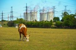 Een concept vernieuwbare groene energie: een madeliefje en een gras over het symbool van gebroken kernenergie royalty-vrije stock afbeelding