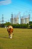 Een concept vernieuwbare groene energie: een madeliefje en een gras over het symbool van gebroken kernenergie royalty-vrije stock afbeeldingen