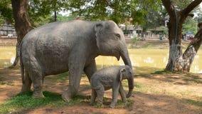Een concrete olifant royalty-vrije stock foto's