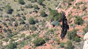 Een condor over Heldere Engel stock afbeelding