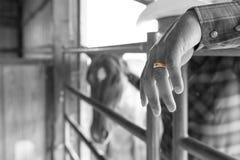 Een cowboy` s verplichting aan huwelijk Stock Foto's
