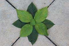 Een cultuur van bladeren stock foto