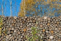 EEN cutted de ronde logboeken en mooie bomen in aard Royalty-vrije Stock Foto's