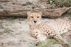 Een dag bij de dierentuin stock foto's