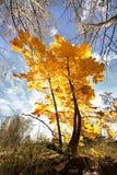 Een dag in het de herfstbos Royalty-vrije Stock Foto