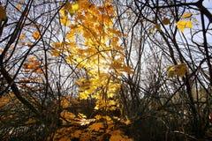Een dag in het de herfstbos Royalty-vrije Stock Foto's
