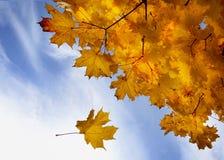 Een dag in het de herfstbos Stock Fotografie