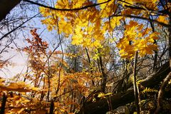 Een dag in het de herfstbos Stock Afbeeldingen