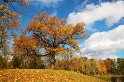 Een dag van de de herfstzon. Royalty-vrije Stock Afbeelding