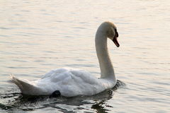 Een Dageraad op het meer Royalty-vrije Stock Afbeeldingen